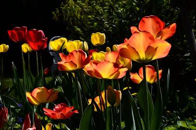 Blumen, flores, Flower, fleurs, květiny, Flores, blomme, blommor, çiçekler, kwiaty, Flor, Hoa, nở hoa, floración, bloom, Kukka, kukinta, La floraison, Fiore, Cvjetni,