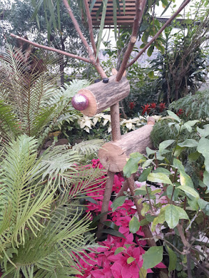 Allan Gardens Conservatory 2019 Winter Flower Show twelve by garden muses--not another Toronto gardening blog