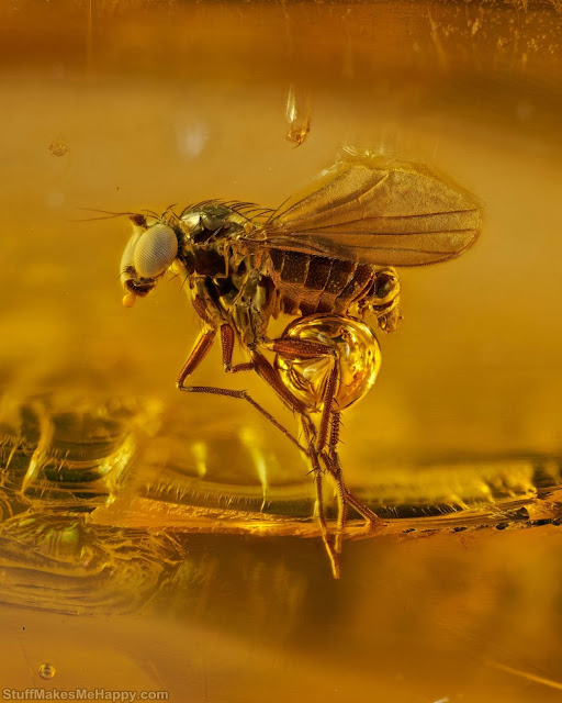 11. An insect in hardened tree sap 45 million years ago. (Photo by Levon Biss Photography Ltd.