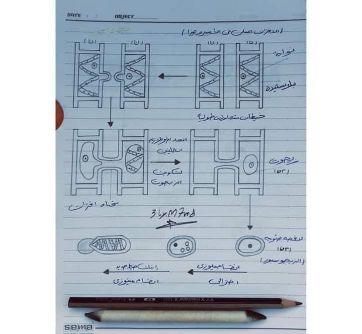 اهم رسومات منهج الاحياء للصف الثالث الثانوي بخط أ/ عماد بدوي 4