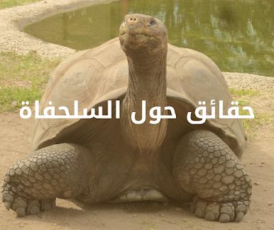 السلاحف -حقائق حول السلحفاة