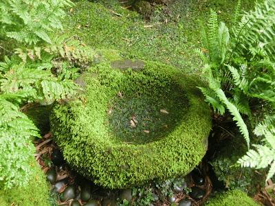 報国寺苔の美