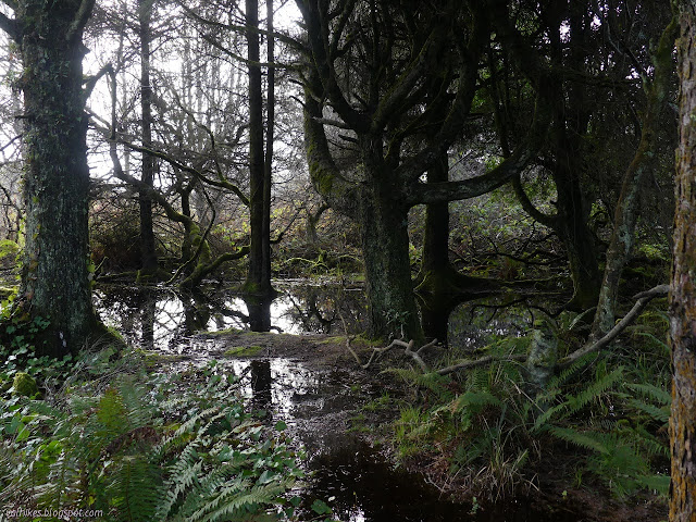 flooding under some trees