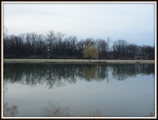 Belle Isle Detroit trees and reflection