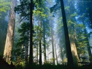 Türkiye'de Ormanlar