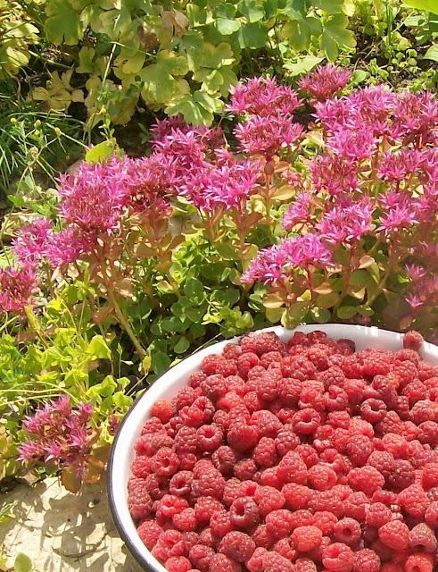 дары лета: ягода - малина