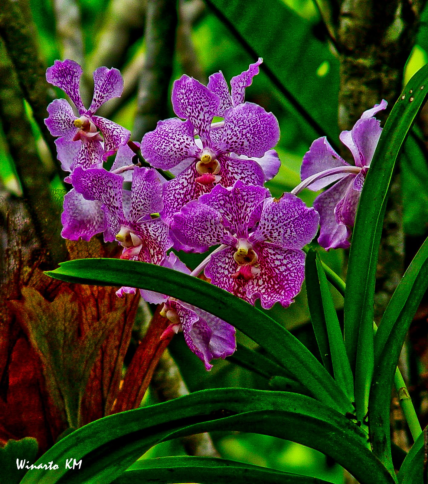 My Special Pictures: Orchids Pictures