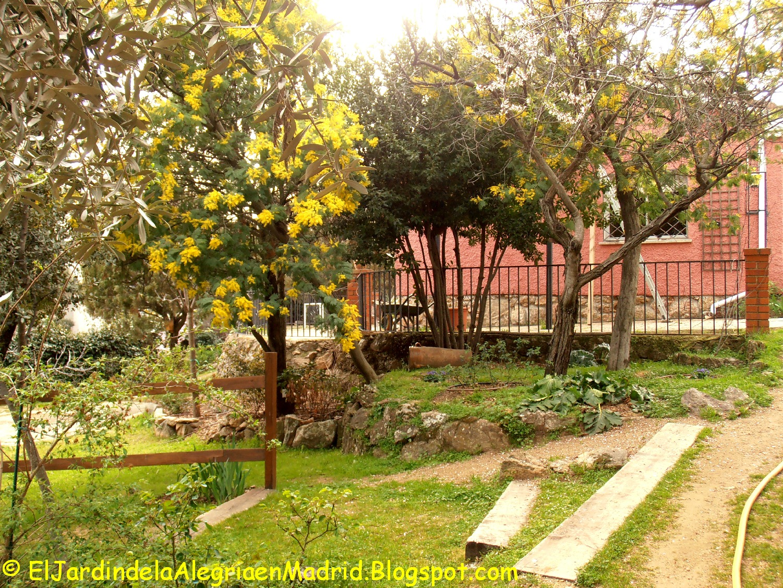 El jard n de la alegr a amarillo solo amarillo for Cancion el jardin de la alegria