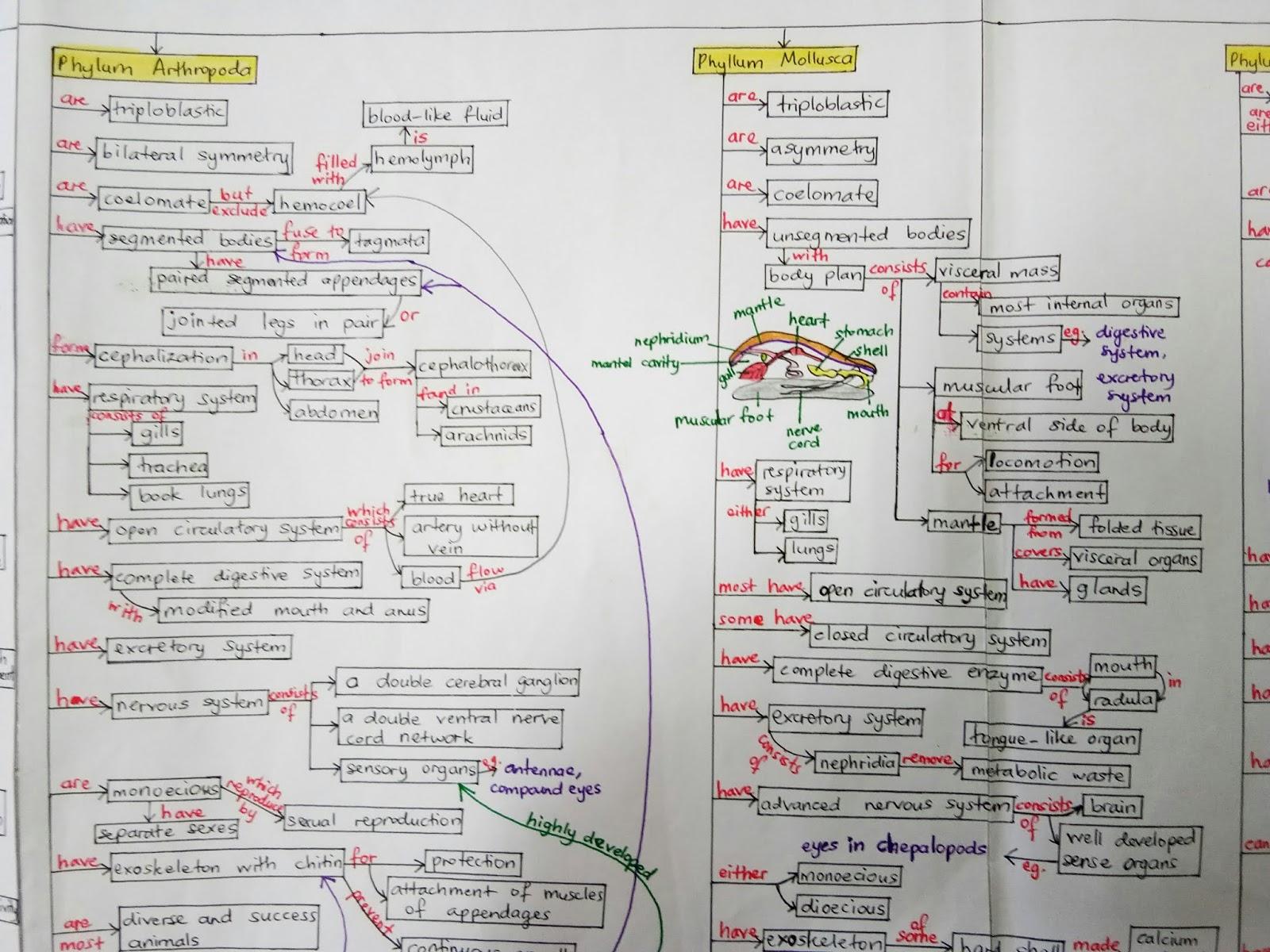 Image of: Invertebrates Kingdom Animalia Part Inspiration Software Biology Is To Serve Mankind Concept Map Biodiversity