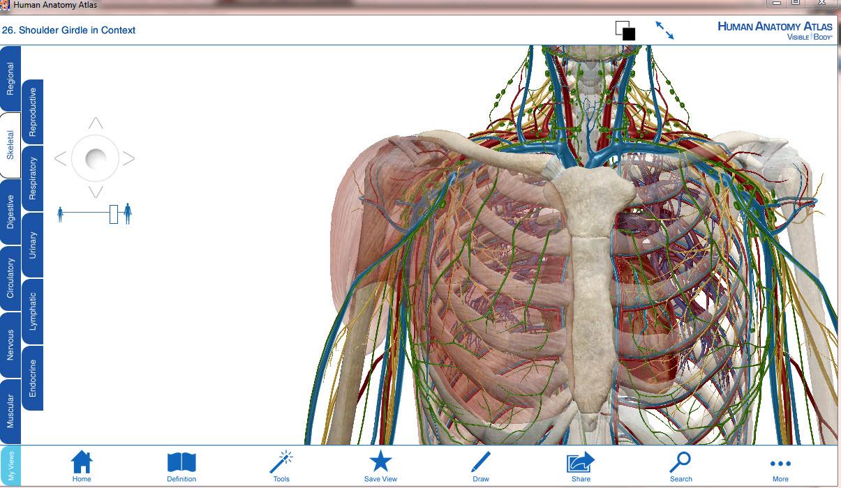 Anatomy Visible Body