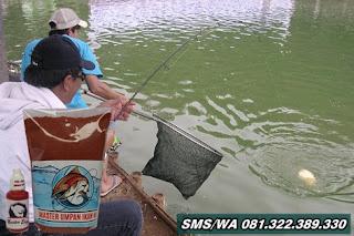 Paket Umpan Khusus Ikan Mas Tombro