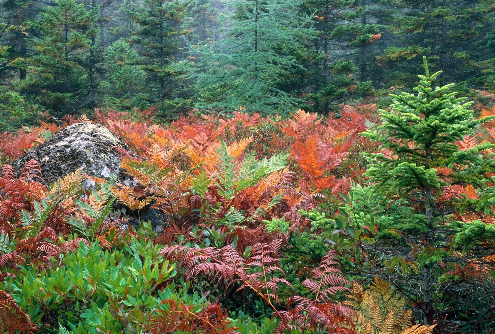 Acadia Furns National Colorful Autumn Park Forests Wallpapers