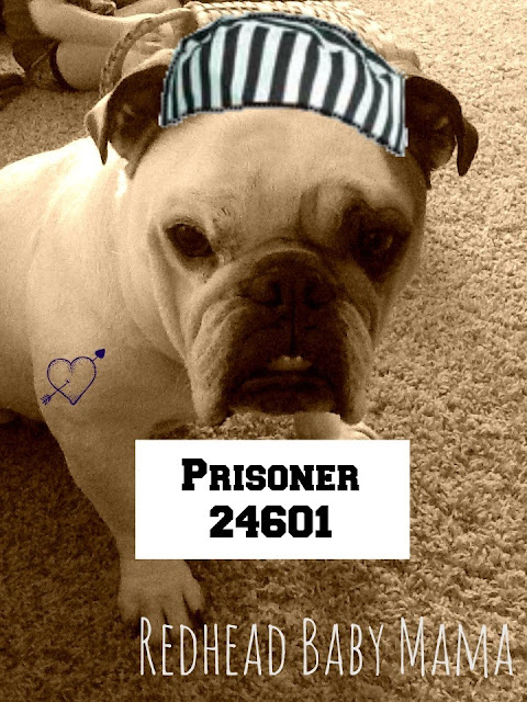 dog mugshot prisoner