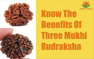 Know The Benefits Of Three Mukhi Rudraksha
