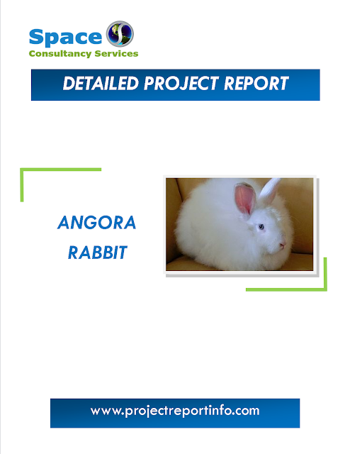 Project Report on Angora rabbit Farming