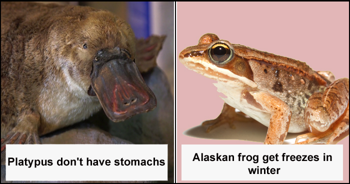 8 Weird Animal Facts That May Surprise You