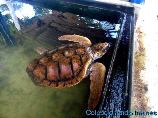 Tortugas en Sri Lanka