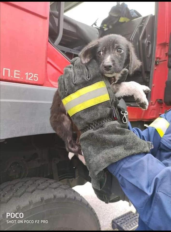 Κουτάβι από τις φλόγες διέσωσε η Πυροσβεστική Ξάνθης