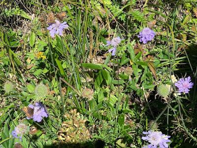 花に集まる高原の蝶