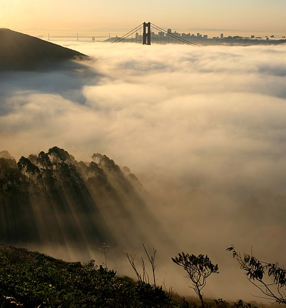 Advection fog layer in San Francisco