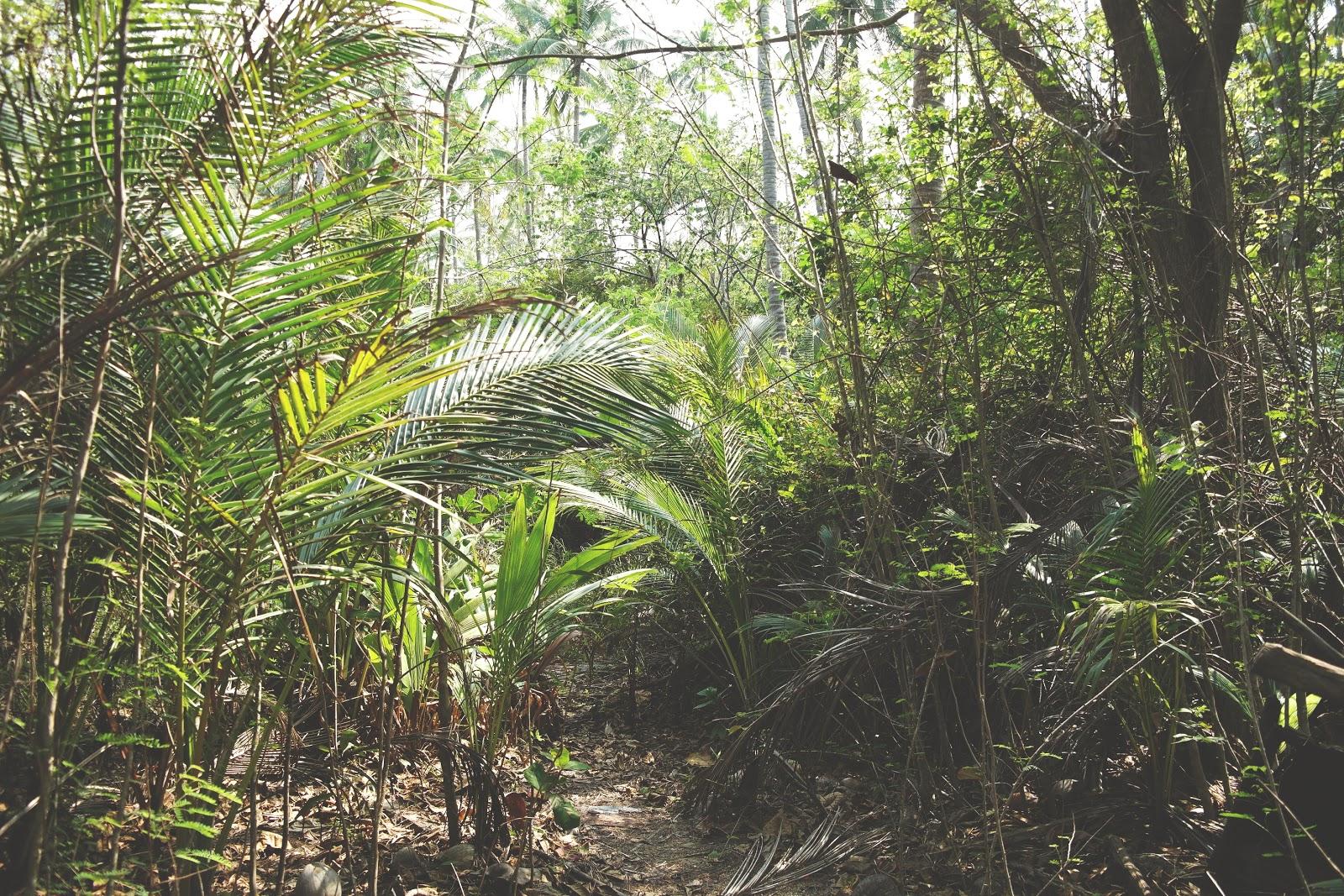 koh phangan tropical jungle