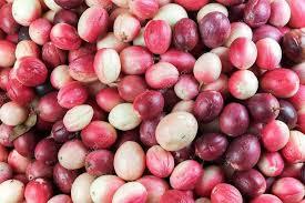karonda-fruit
