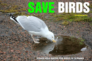 KEEP WATER FOR BIRDS IN SUMMER SAVE BIRDS