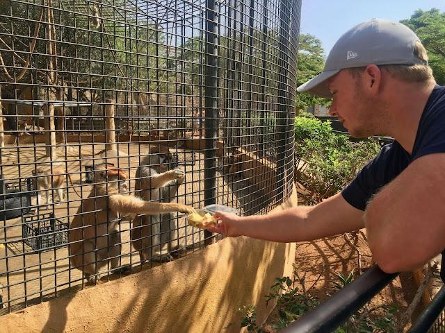 Monkey-park-los-cristianos-steve-feeding-monkey