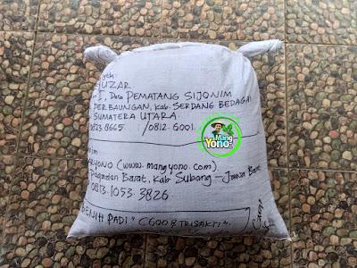 Benih pesana    DEL YUZAR Serdang Bedagai, Sumut   (Sesudah Packing)