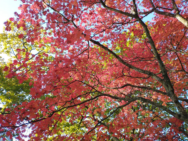 Spectacular autumn foliage at Exbury Gardens