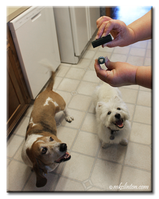 Bentley and Pierre love the Ark Naturals Breath-Less Brushless Toothpaste