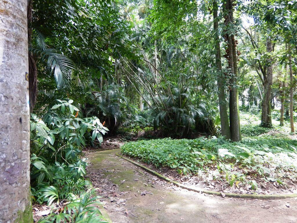 Parque Lage Trilha Cristo Redentor