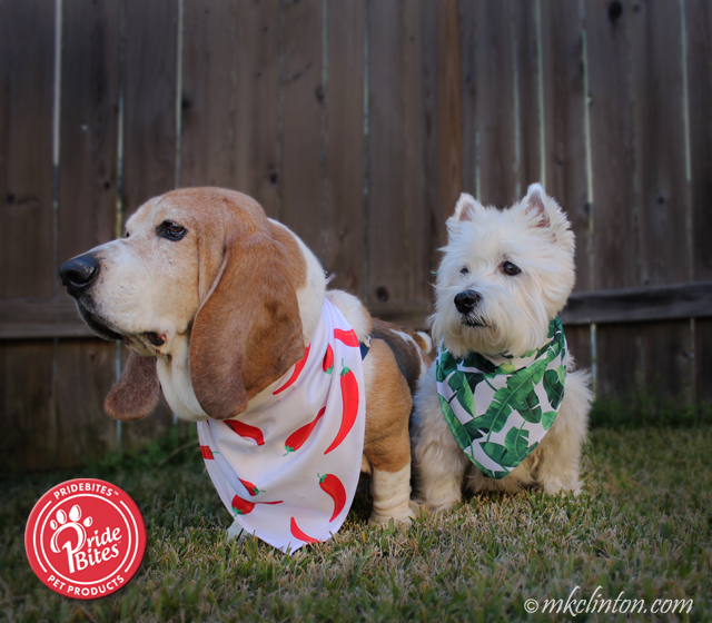 Two dogs wearing bandanas