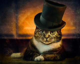 The-detective-cat-with-hat-boss-look-funny-image.jpg