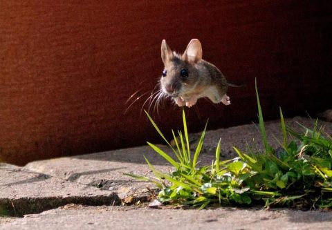 Cute and Funny Pictures and more Gravity Defying Mouse