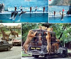 kinh nghiem du lich thai land bangkok safari world Zoo 2