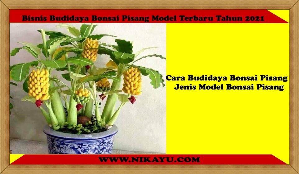 Bisnis Budidaya Bonsai Pisang Model Terbaru Tahun 2021