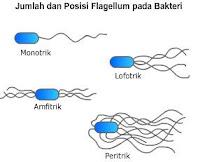 Jenis jenis Bakteri