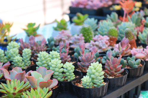 image of assorted live succulents