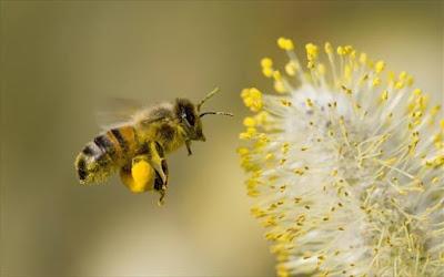 Φυτεύουμε ένα φυτό για τις μέλισσες !