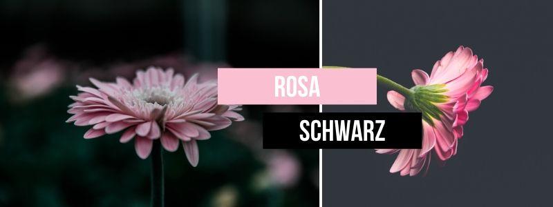 Rosa-mit-Schwarz-kombinieren