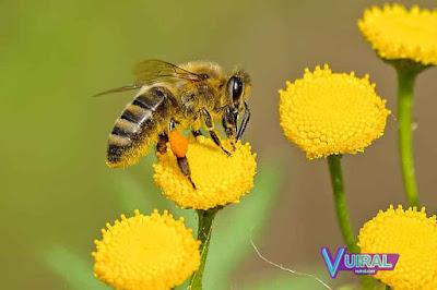 Contoh Simbiosis Mutualisme Bunga Dengan Lebah