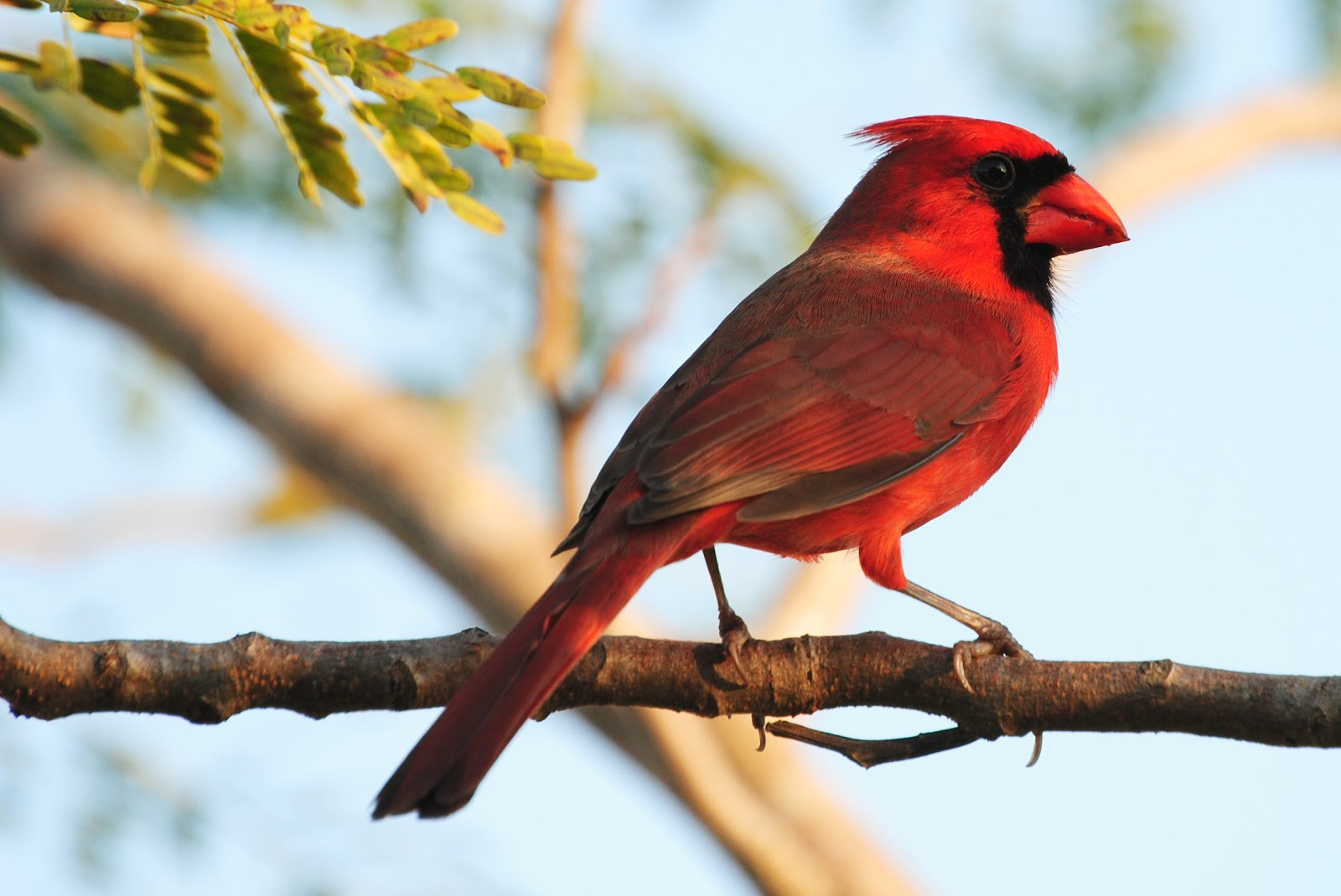 Field Notes And Photos: Red Birds & Red Flowers
