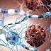 Прекомерната реакция на имунната система на вирусни инфекции зависи от обмяната на веществата