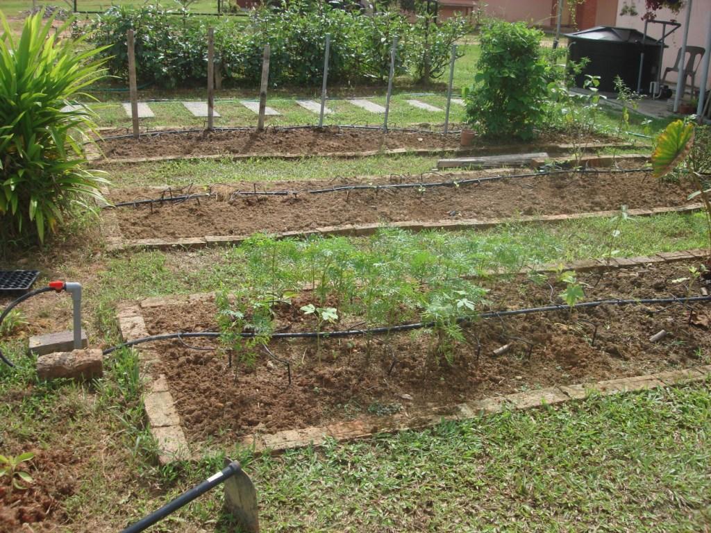 My little vegetable garden Garden Design and its outcome