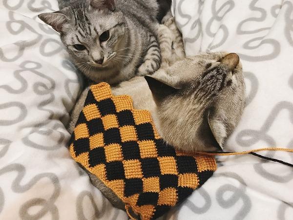 オレンジ×黒の配色のブロックアフガン編みと猫たち