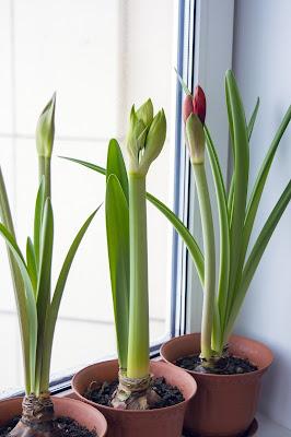 Manfaat memelihara tumbuhan di rumah juga bisa membantu pernapasan kita