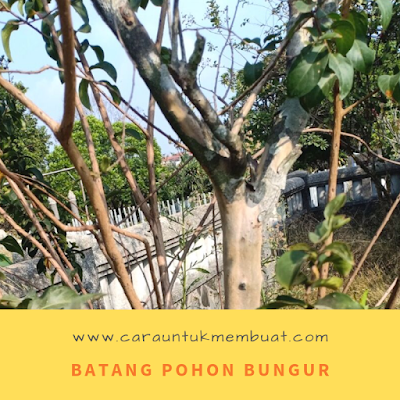Batang Pohon Bungur