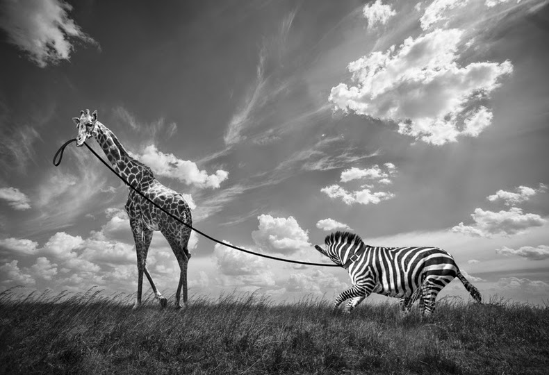 03-Thomas-Subtil-Black-&-White-Photo-of-Surreal-Animals-Downtime-www-designstack-co