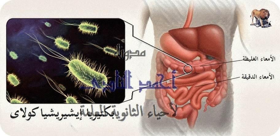 أحياء الثانوية  العامة - تقنيات التكنولوجيا الجزيئية ( الهندسة الوراثية ) – مخاطر تقنية DNA  معاد الإتحاد  - بكتيريا إيشيريشيا كولاى e.coli
